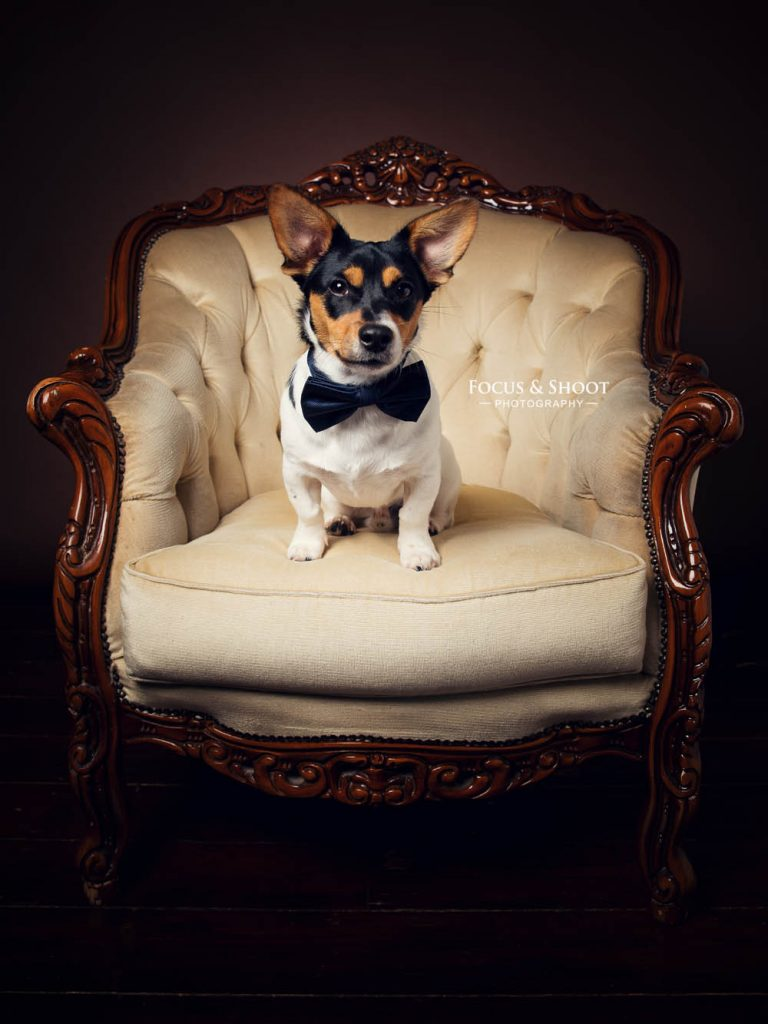 Studio dog photography | Pet Portraits Beeston, Nottingham